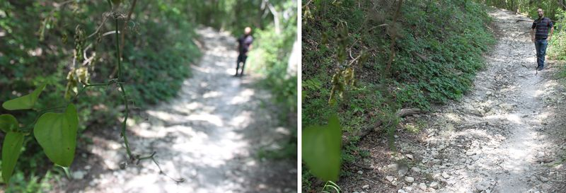 Blog_trail