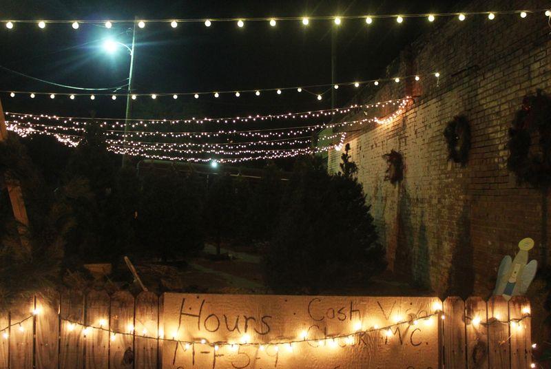 Dec3_trees_IMG_1259