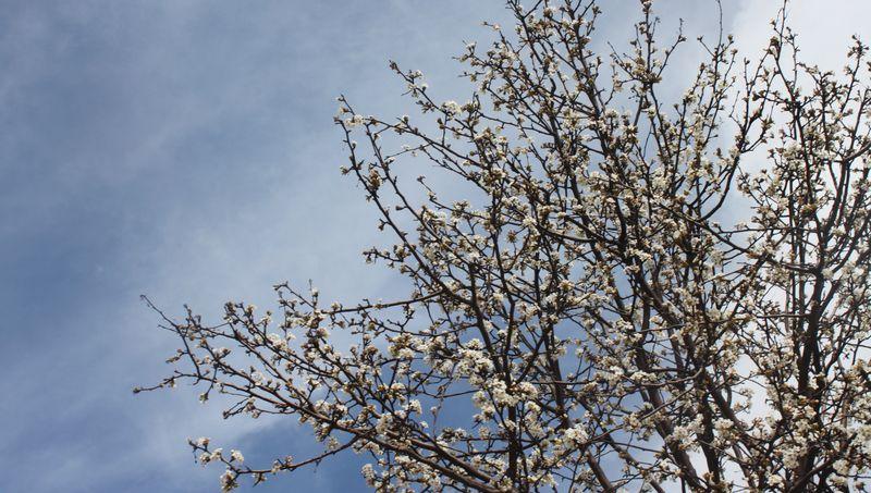 Blog_wu_spring_IMG_6441