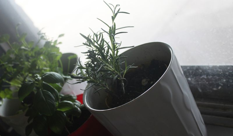 Green_herbs_IMG_6489