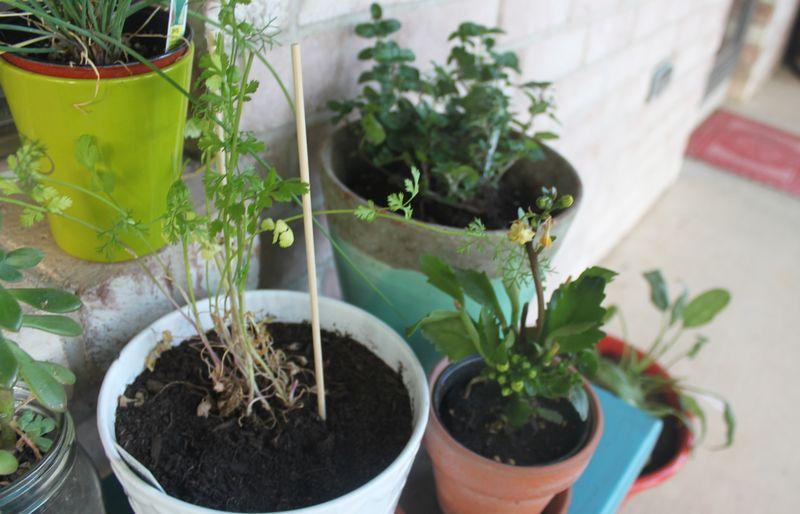 Plants_IMG_8511