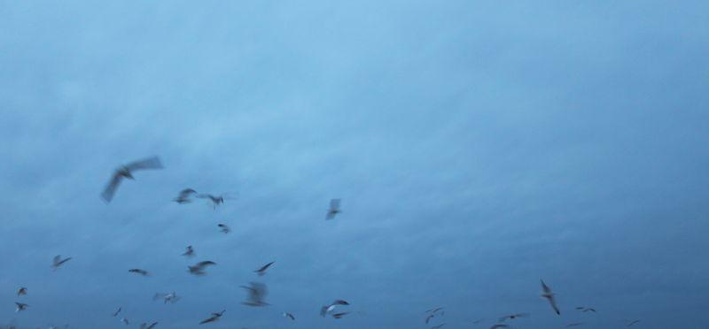 Small_birds_IMG_3422