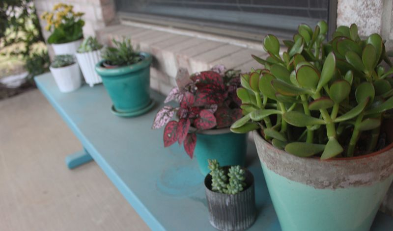 March_plants_IMG_7408