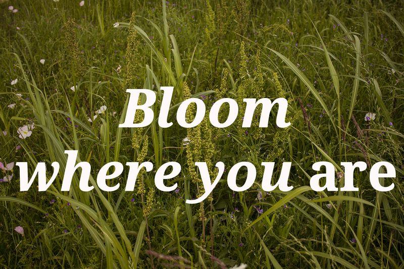 Bloom_4x6